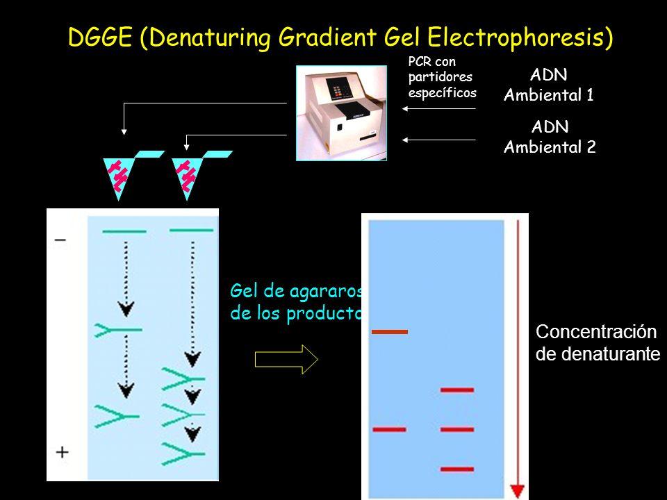 DGGE (Denaturing Gradient Gel Electrophoresis)