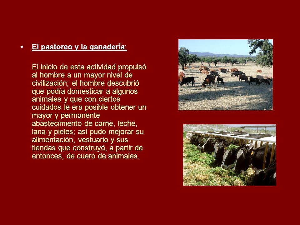 El pastoreo y la ganadería: