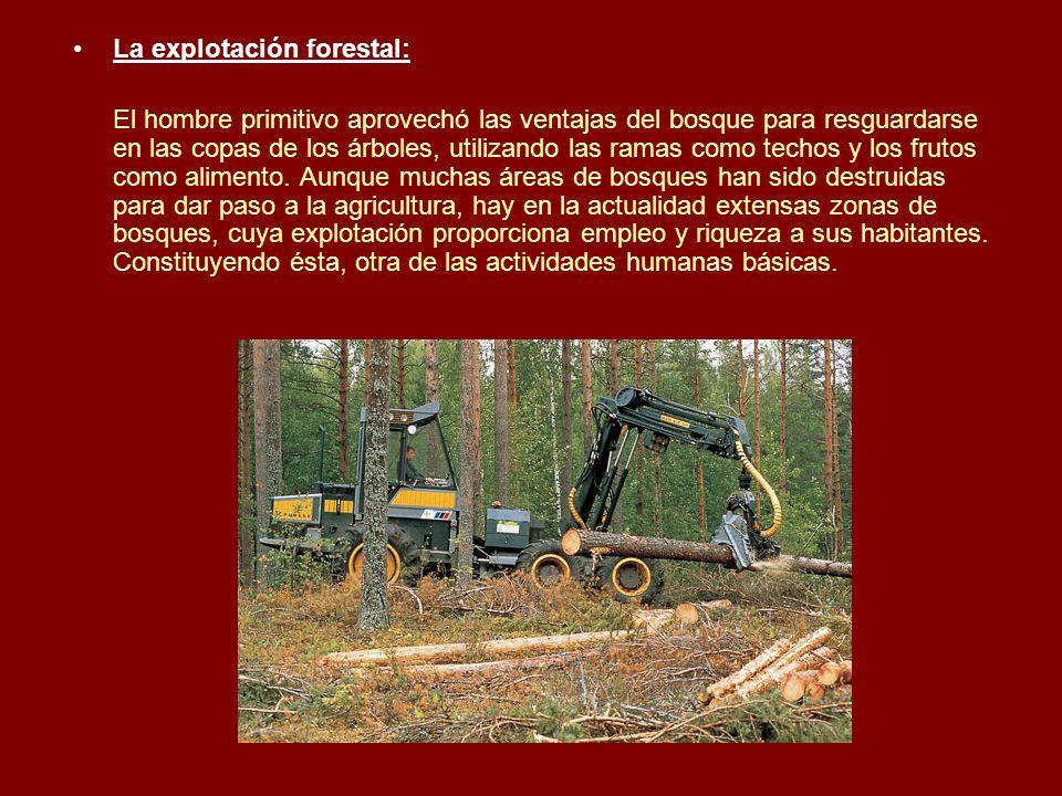 La explotación forestal: