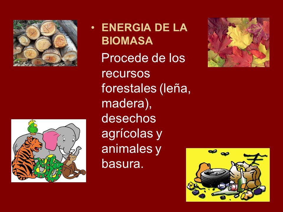 ENERGIA DE LA BIOMASA Procede de los recursos forestales (leña, madera), desechos agrícolas y animales y basura.