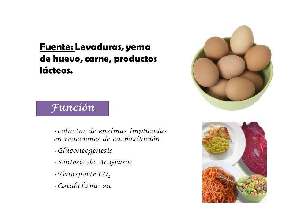 Fuente: Levaduras, yema de huevo, carne, productos lácteos.