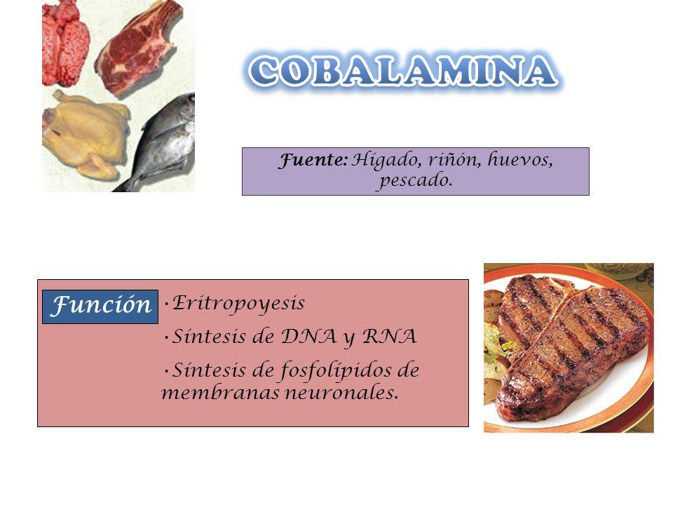 Fuente: Hígado, riñón, huevos, pescado.