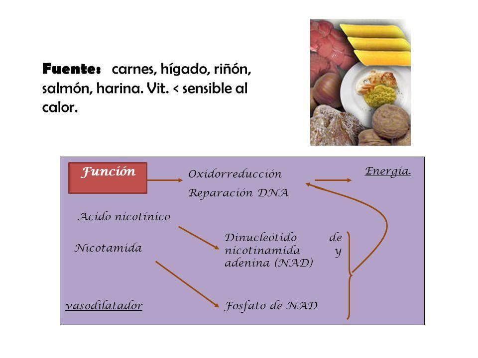 Fuente: carnes, hígado, riñón, salmón, harina. Vit