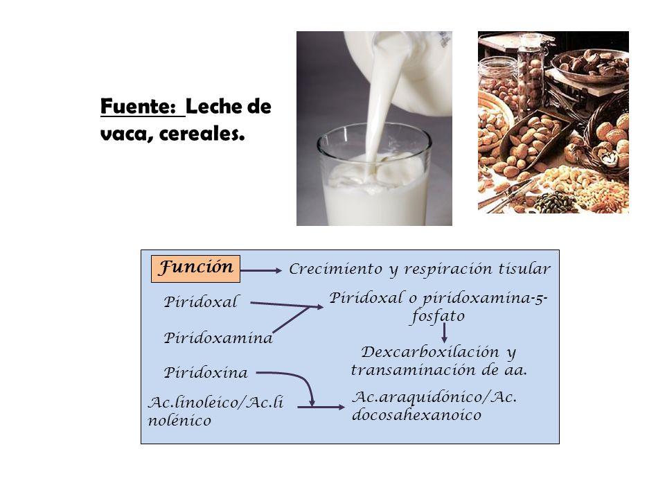 Fuente: Leche de vaca, cereales.