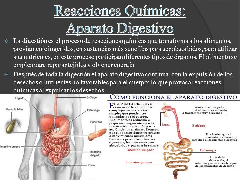 Reacciones Químicas: Aparato Digestivo