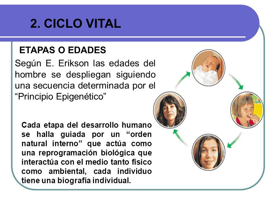 2. CICLO VITAL ETAPAS O EDADES