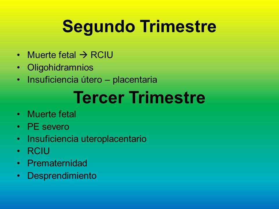 Segundo Trimestre Tercer Trimestre