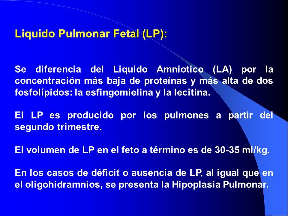 Liquido Pulmonar Fetal (LP):