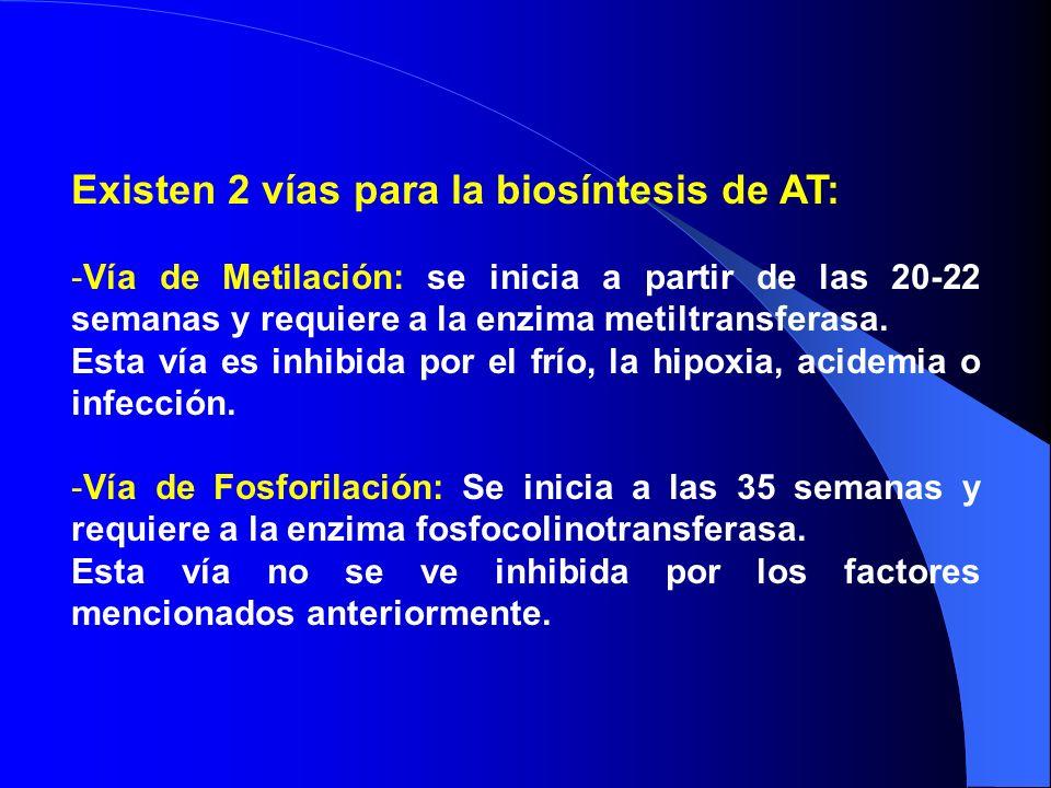 Existen 2 vías para la biosíntesis de AT:
