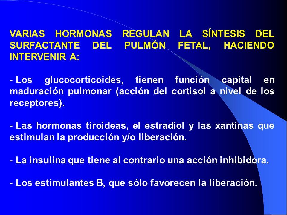 VARIAS HORMONAS REGULAN LA SÍNTESIS DEL SURFACTANTE DEL PULMÓN FETAL, HACIENDO INTERVENIR A: