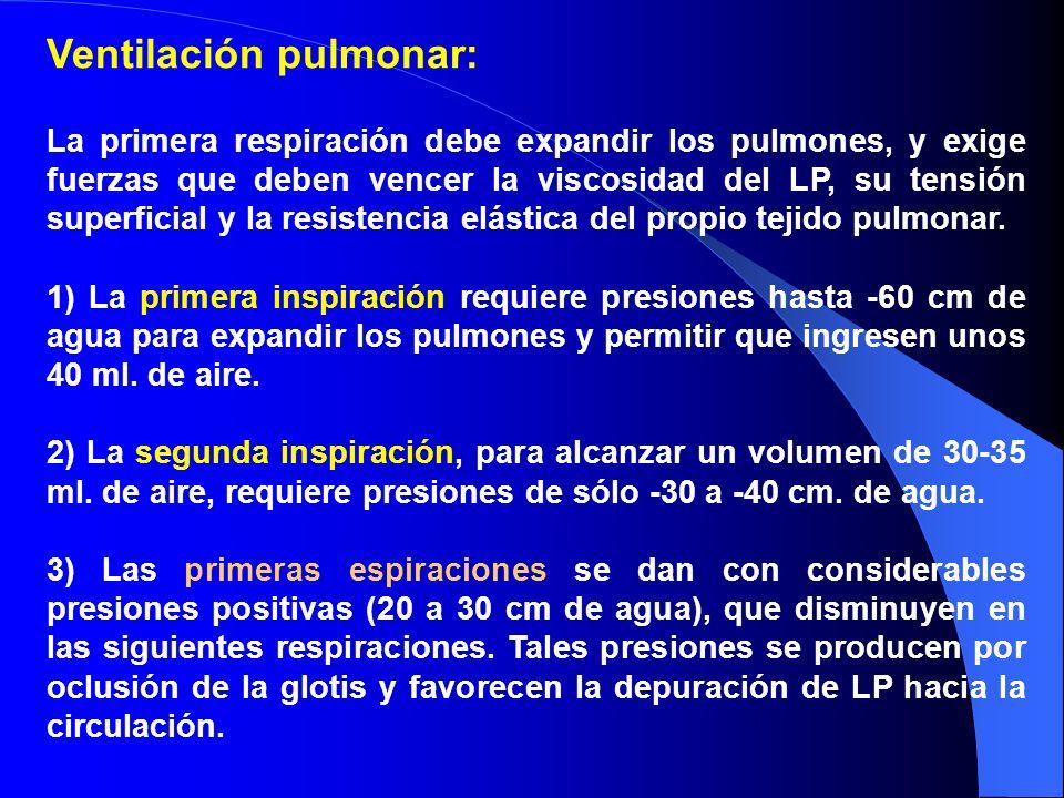 Ventilación pulmonar: