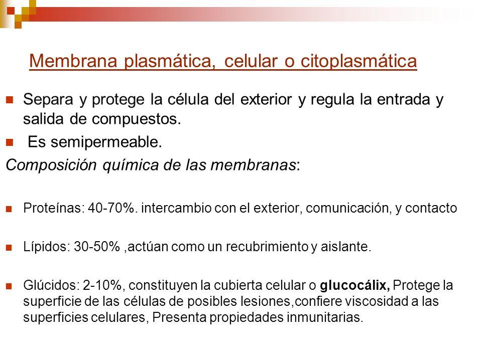 Membrana plasmática, celular o citoplasmática