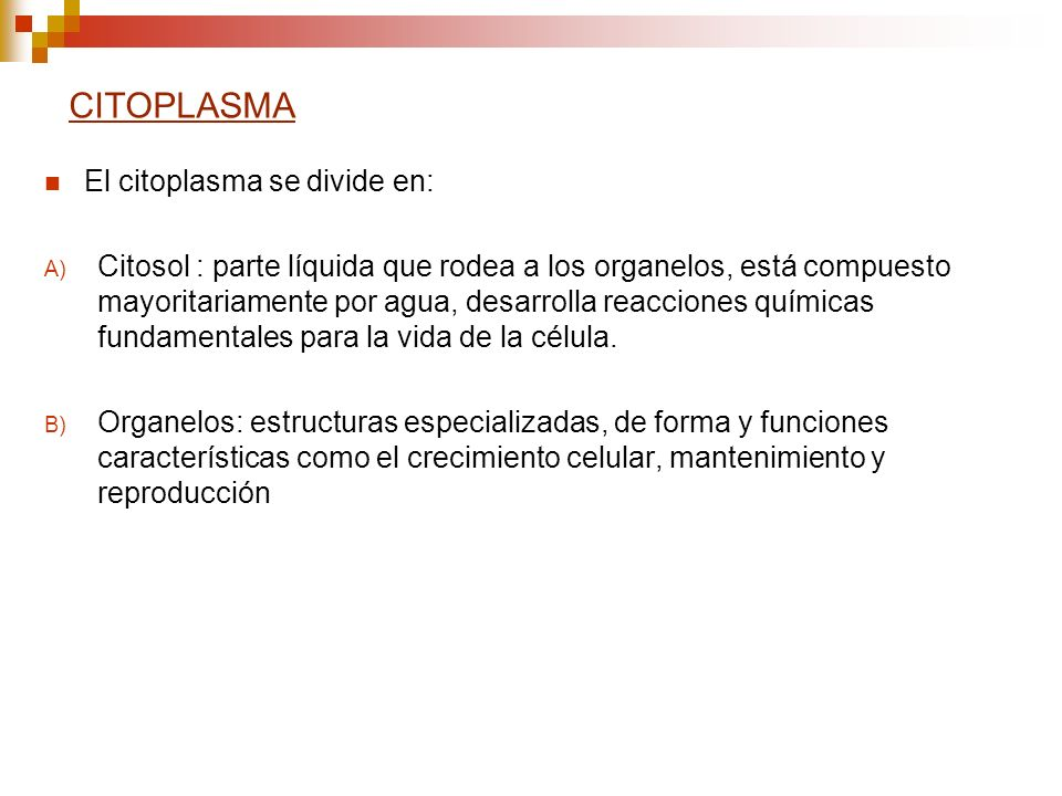 CITOPLASMA El citoplasma se divide en: