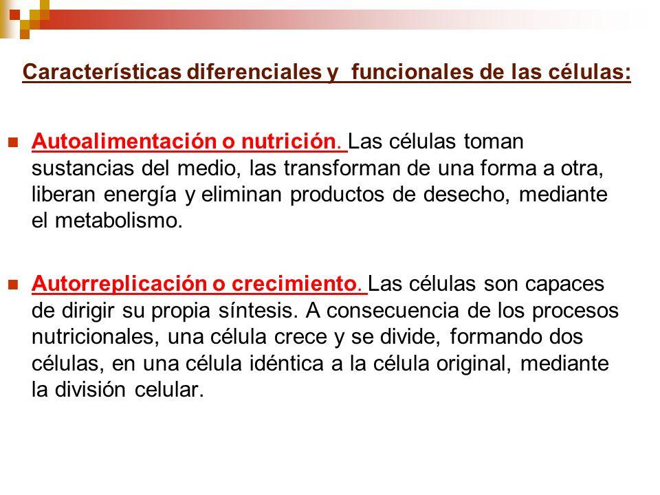 Características diferenciales y funcionales de las células: