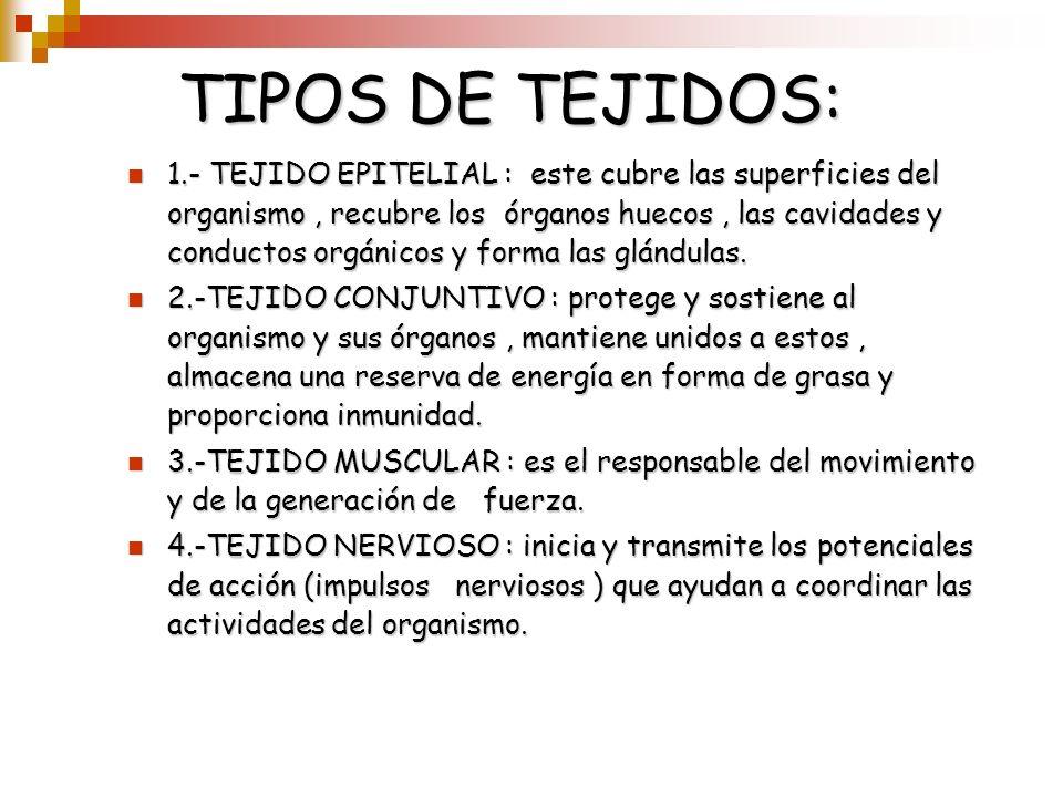 TIPOS DE TEJIDOS: