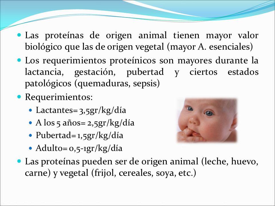 Las proteínas de origen animal tienen mayor valor biológico que las de origen vegetal (mayor A. esenciales)