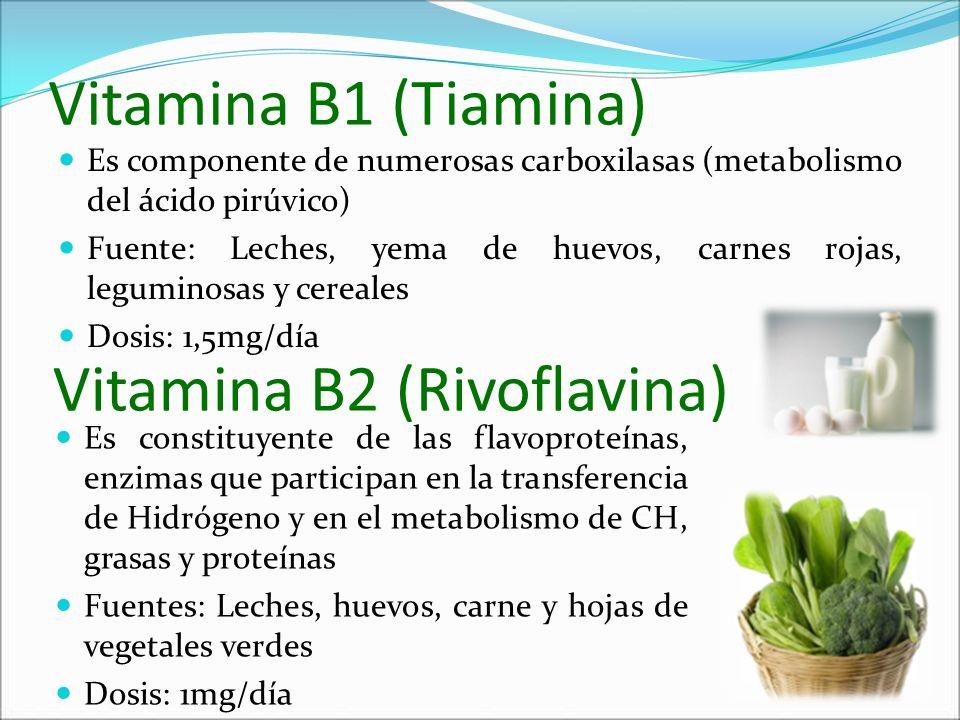 Vitamina B2 (Rivoflavina)