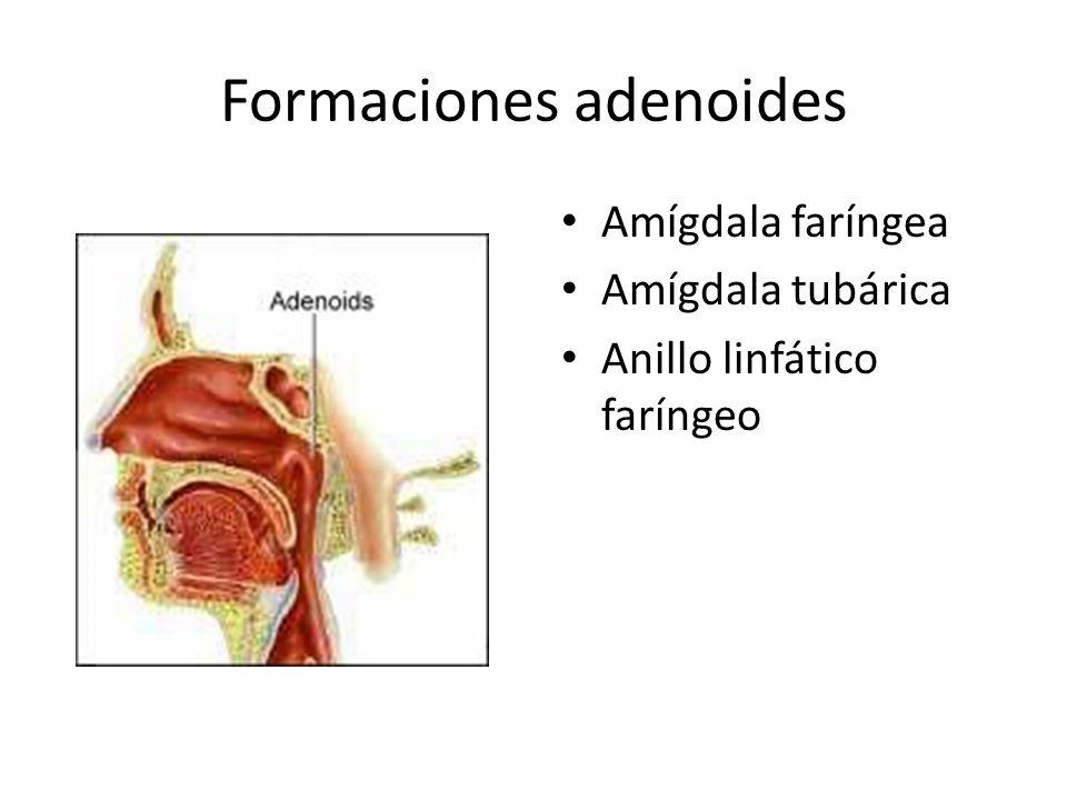Formaciones adenoides