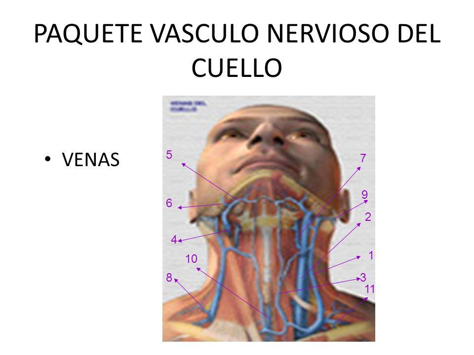PAQUETE VASCULO NERVIOSO DEL CUELLO