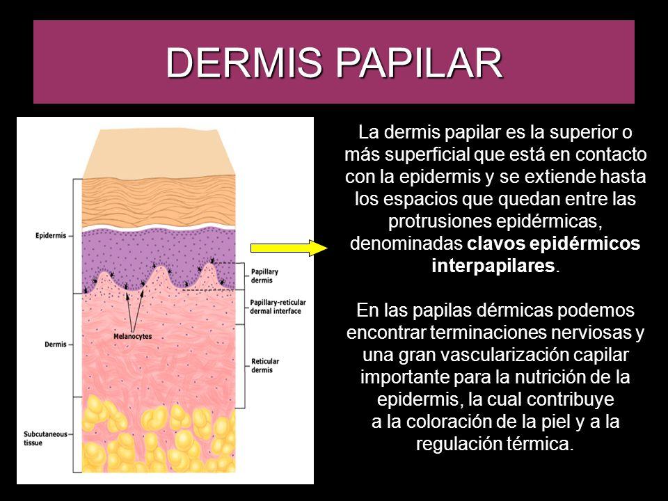 a la coloración de la piel y a la regulación térmica.