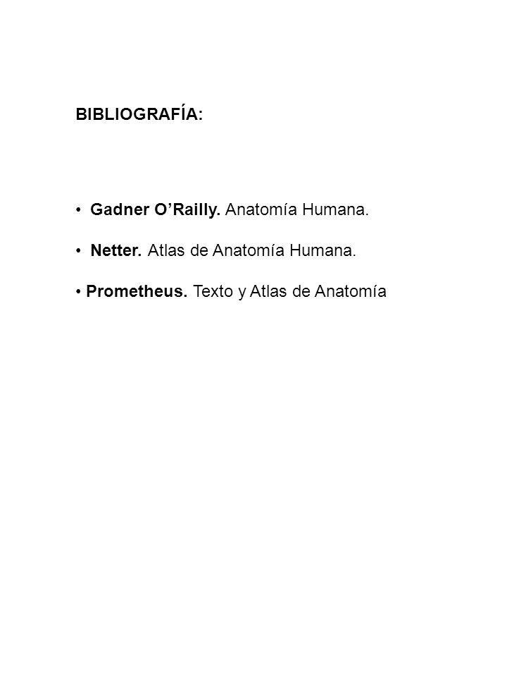 BIBLIOGRAFÍA: Gadner O'Railly. Anatomía Humana. Netter.