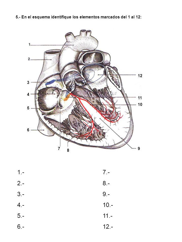 5.- En el esquema identifique los elementos marcados del 1 al 12:
