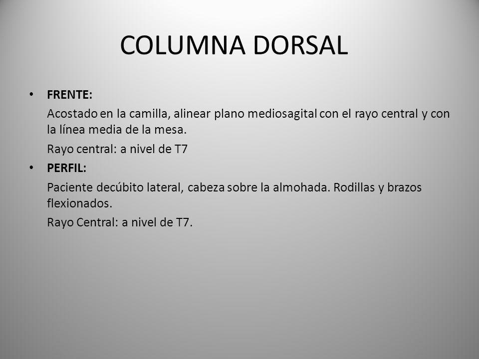 COLUMNA DORSAL FRENTE: