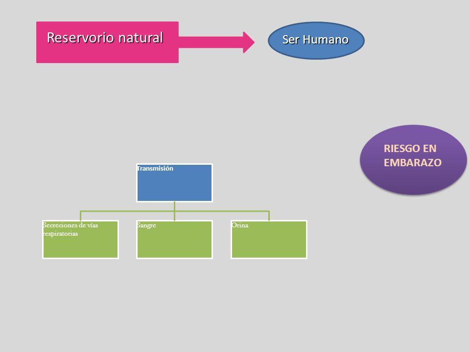 Reservorio natural Ser Humano RIESGO EN EMBARAZO Transmisión