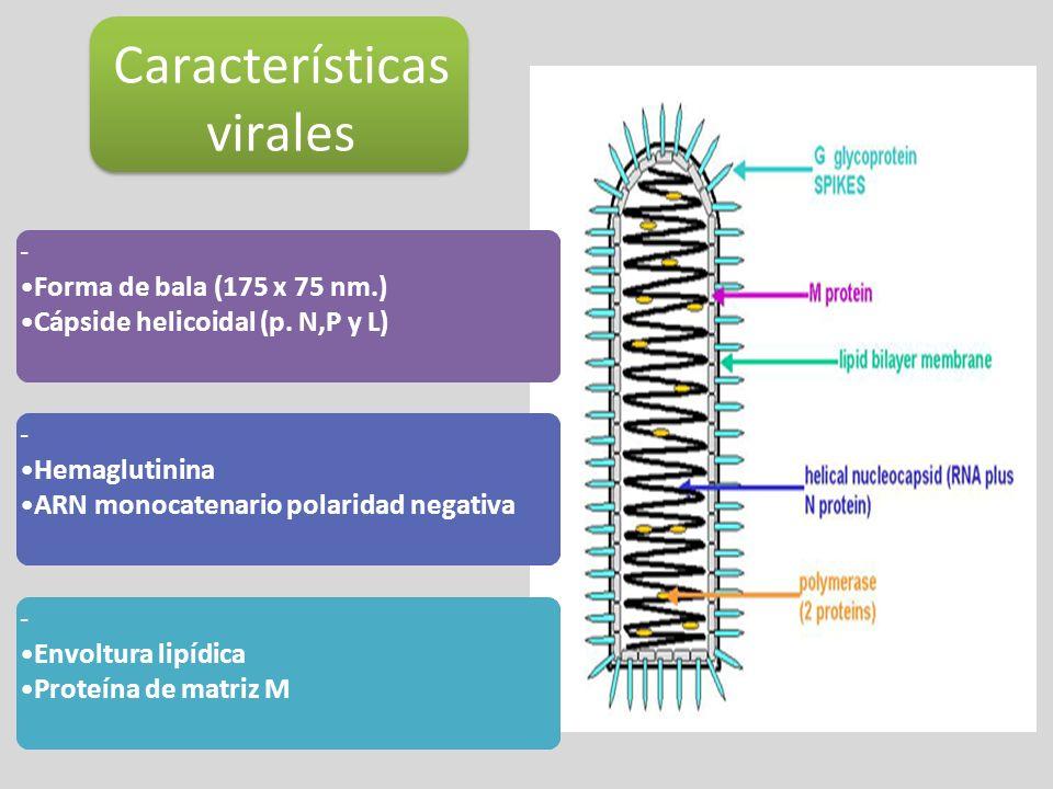 Características virales
