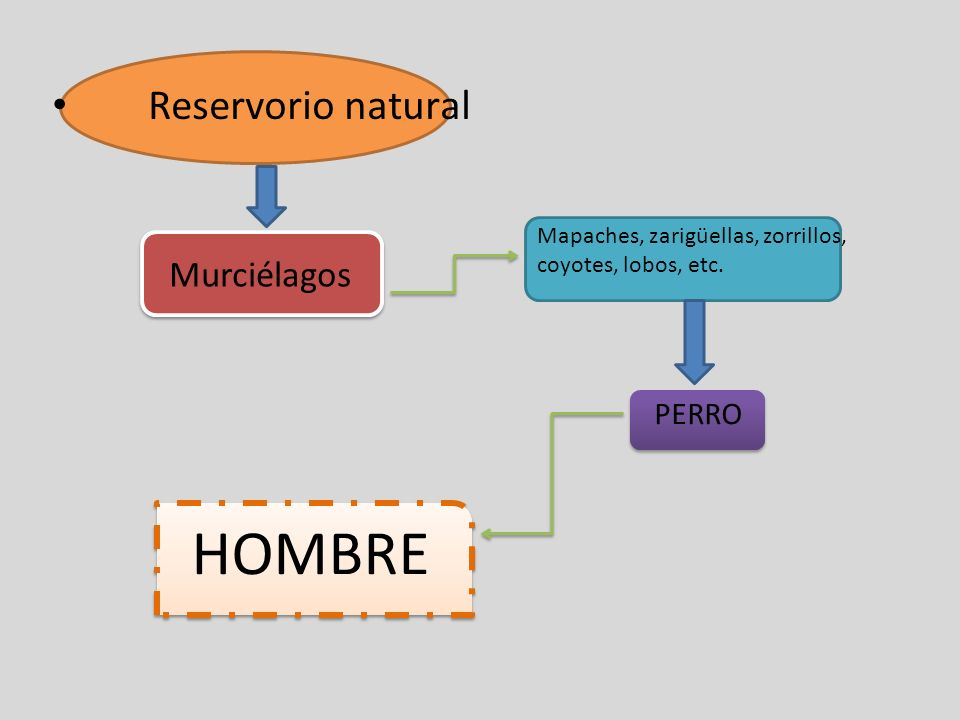 HOMBRE Reservorio natural Murciélagos PERRO