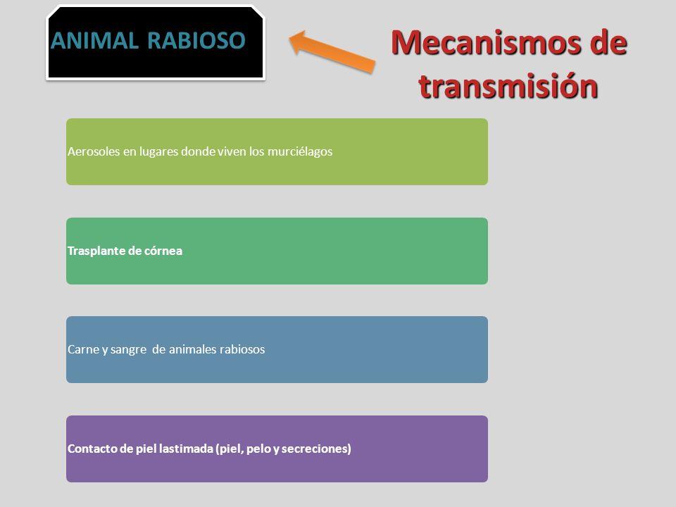 Mecanismos de transmisión
