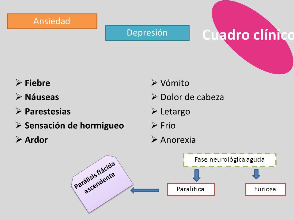 Cuadro clínico Ansiedad Depresión Fiebre Náuseas Parestesias