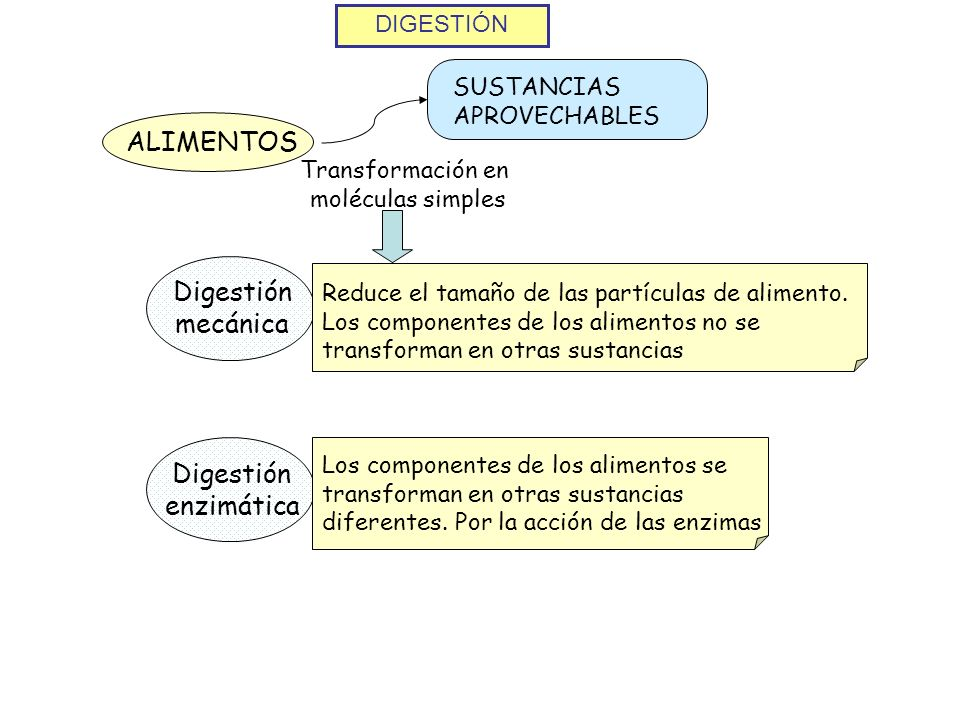ALIMENTOS Digestión mecánica Digestión enzimática DIGESTIÓN