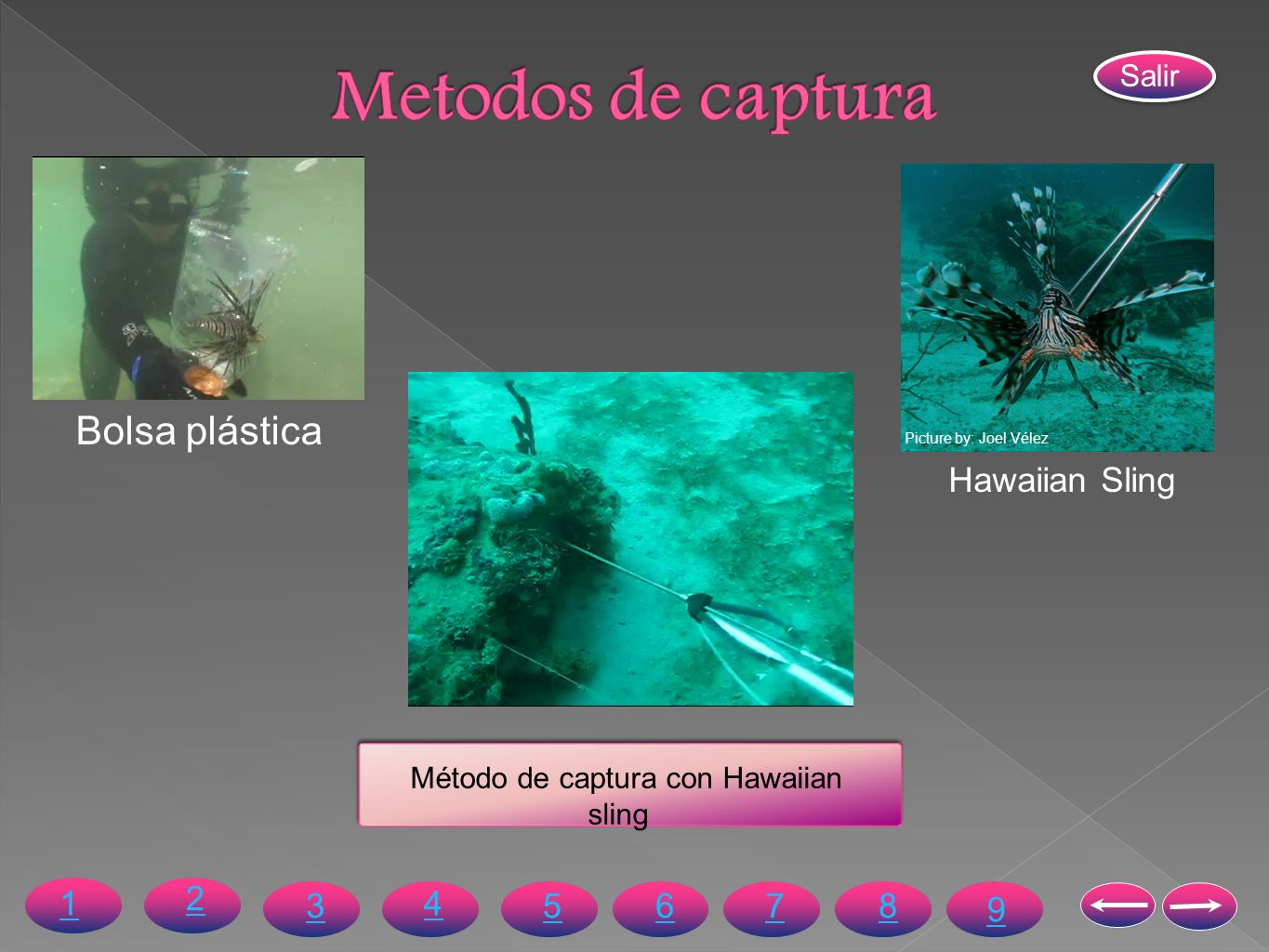 Método de captura con Hawaiian sling