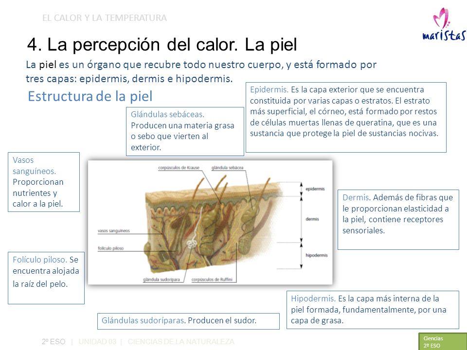 4. La percepción del calor. La piel