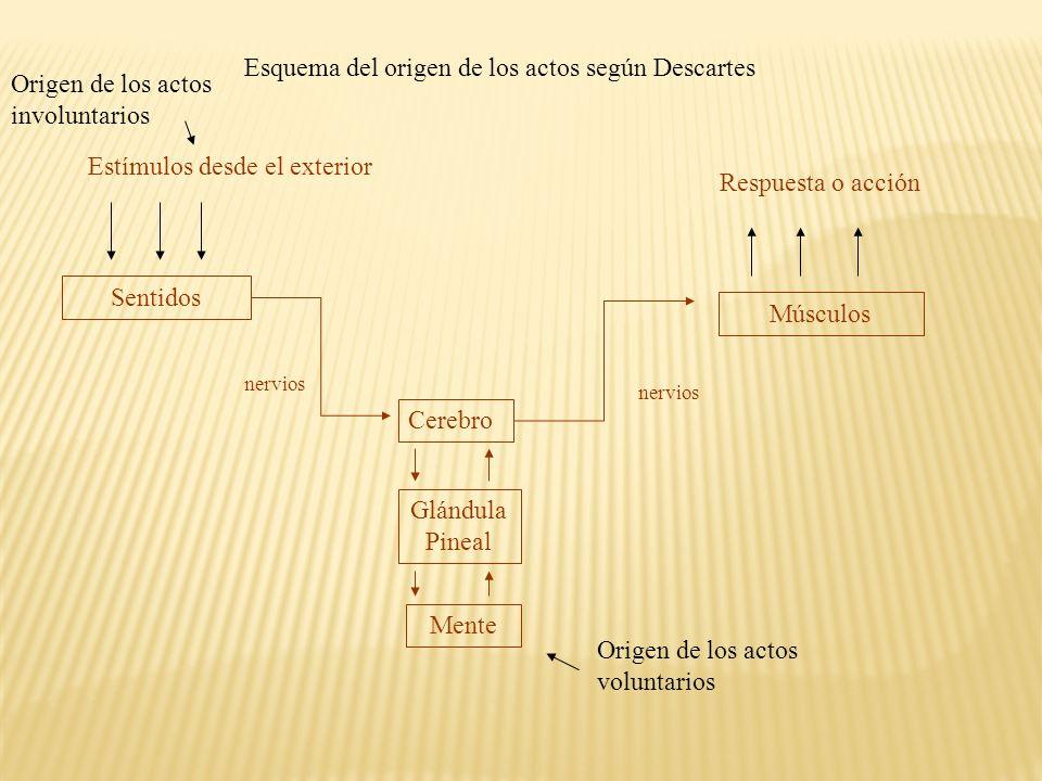 Esquema del origen de los actos según Descartes