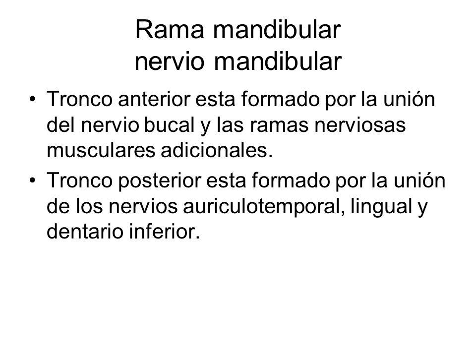 Rama mandibular nervio mandibular