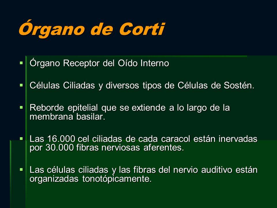 Órgano de Corti Órgano Receptor del Oído Interno