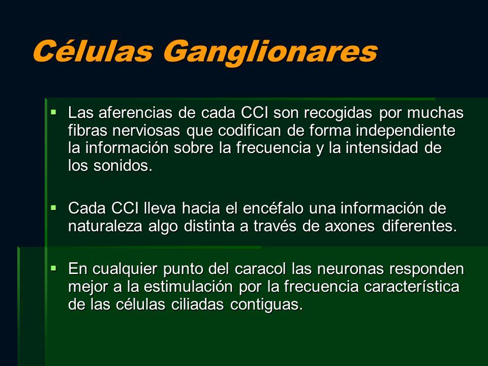 Células Ganglionares