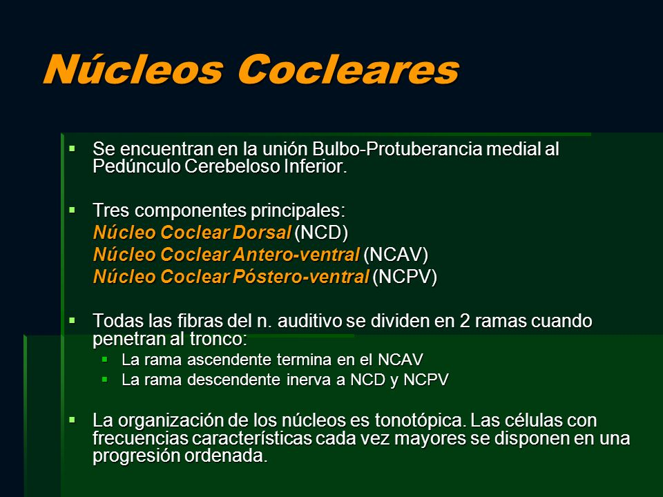 Núcleos Cocleares Se encuentran en la unión Bulbo-Protuberancia medial al Pedúnculo Cerebeloso Inferior.