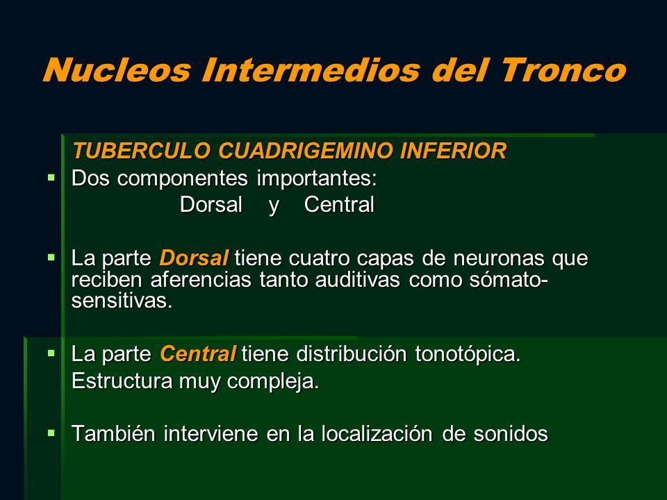 Nucleos Intermedios del Tronco