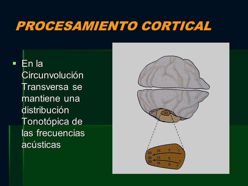 PROCESAMIENTO CORTICAL