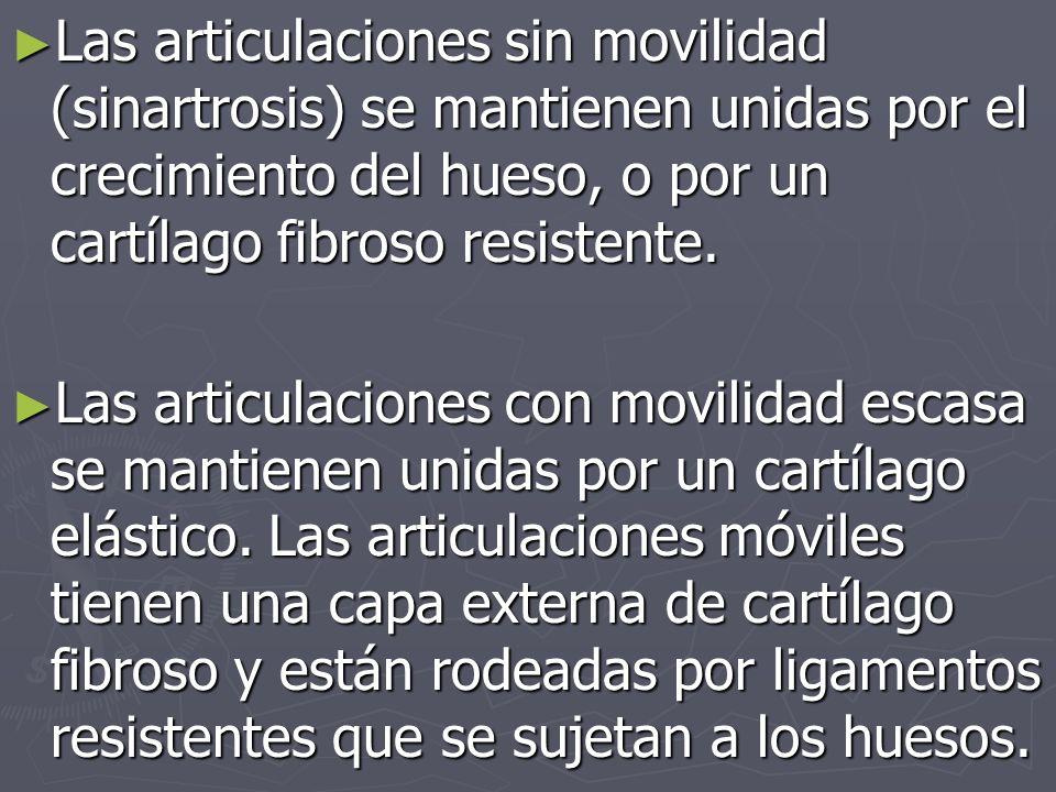 Las articulaciones sin movilidad (sinartrosis) se mantienen unidas por el crecimiento del hueso, o por un cartílago fibroso resistente.