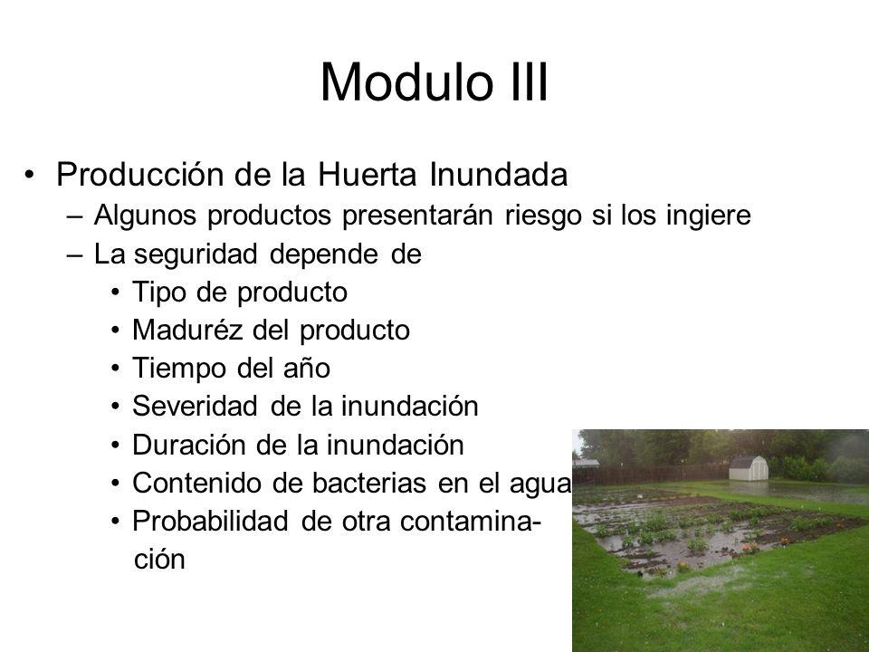 Modulo III Producción de la Huerta Inundada