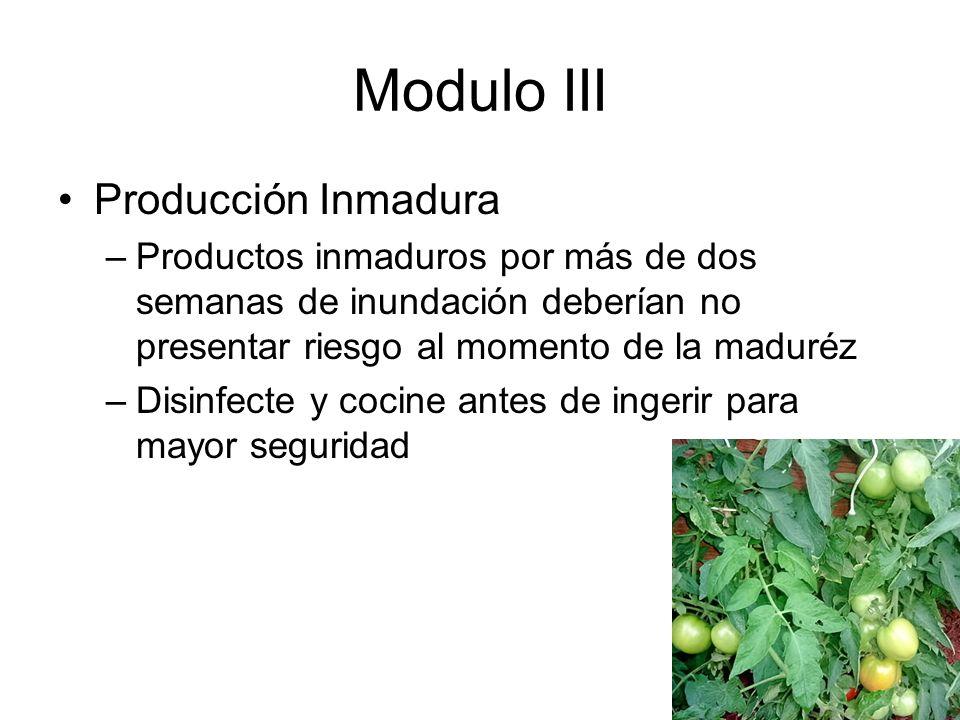 Modulo III Producción Inmadura