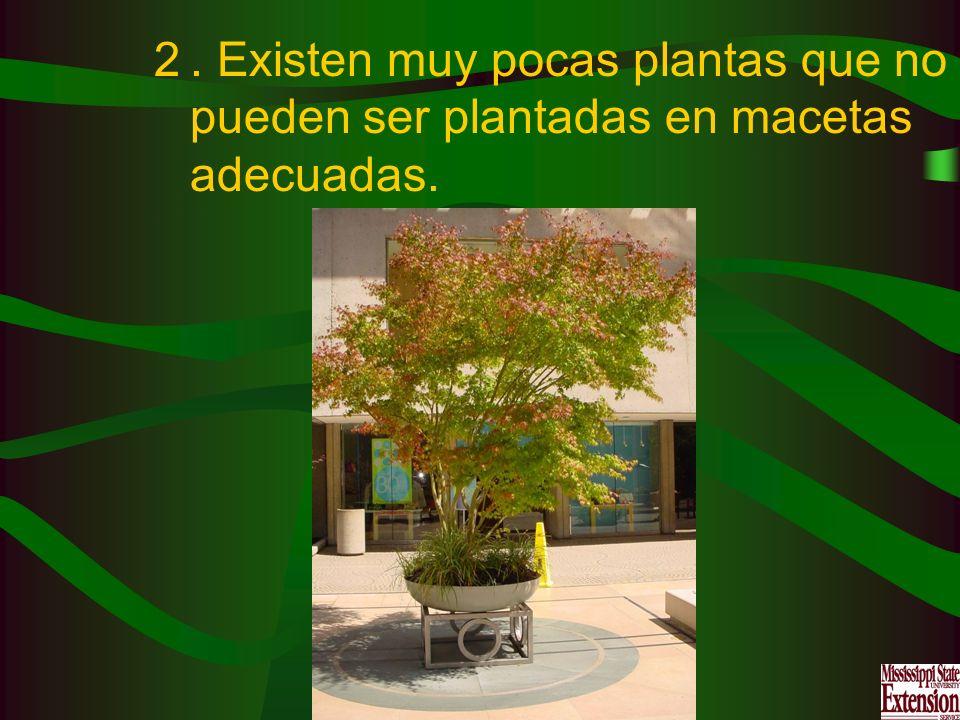 . Existen muy pocas plantas que no pueden ser plantadas en macetas adecuadas.