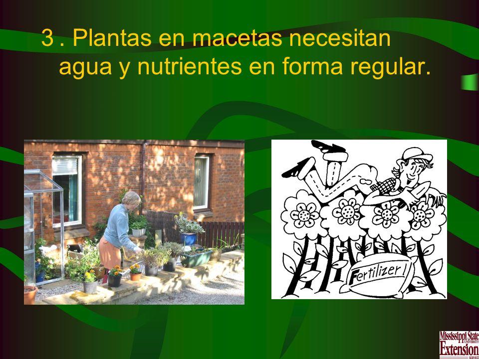 . Plantas en macetas necesitan agua y nutrientes en forma regular.