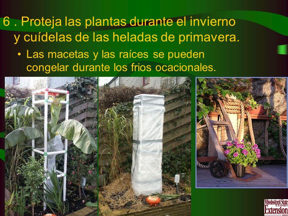 . Proteja las plantas durante el invierno y cuídelas de las heladas de primavera.