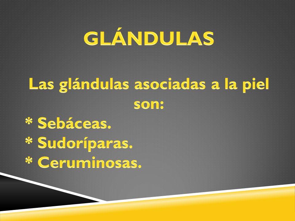 Las glándulas asociadas a la piel son: