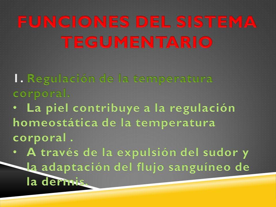 FUNCIONES DEL SISTEMA TEGUMENTARIO